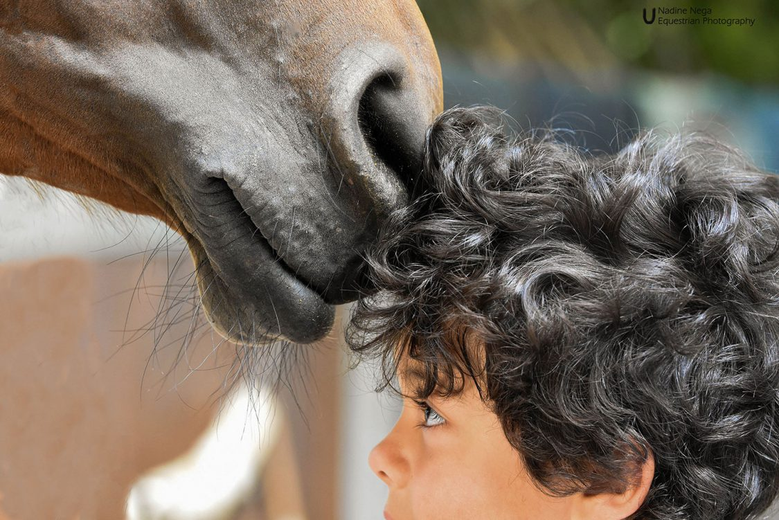 Nose of bay mare kissing kid's head / Nariz de yegua colorada besando a cabeza de niño