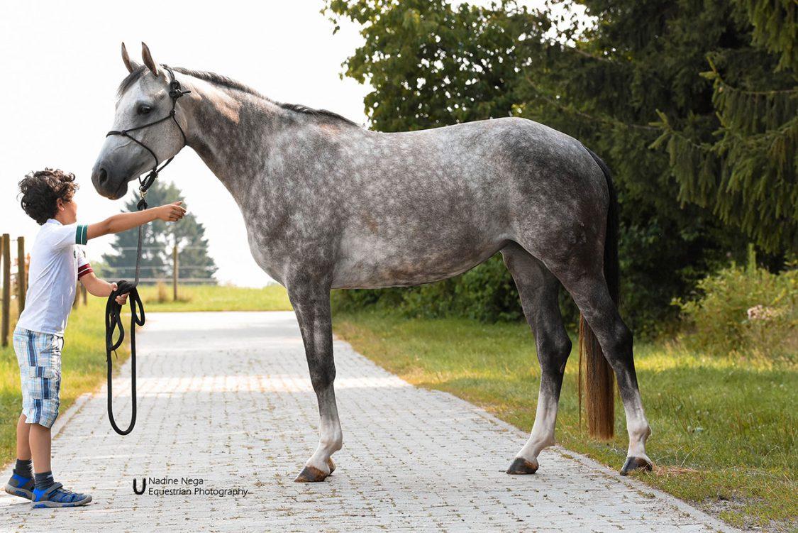 Grey mare lead by little boy / Yegua gris llevada por niño chico