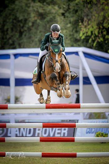 Bay horse with blaze jumping oxer / Caballo colorado con cara blanca saltando oxer